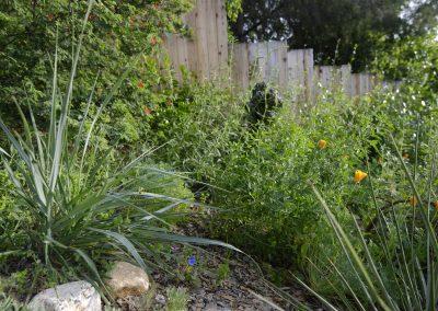 Plant Native Plants
